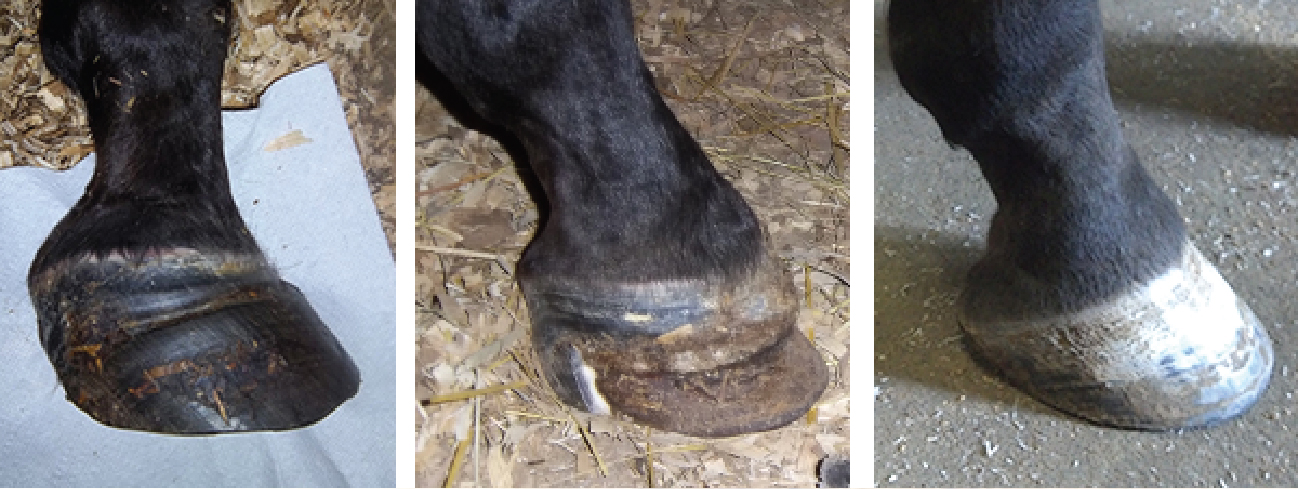Life Data Labs Laminitis Case Study
